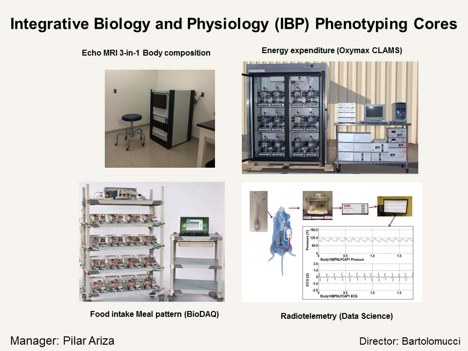 Integrative Biology and Physiology Phenotyping Cores