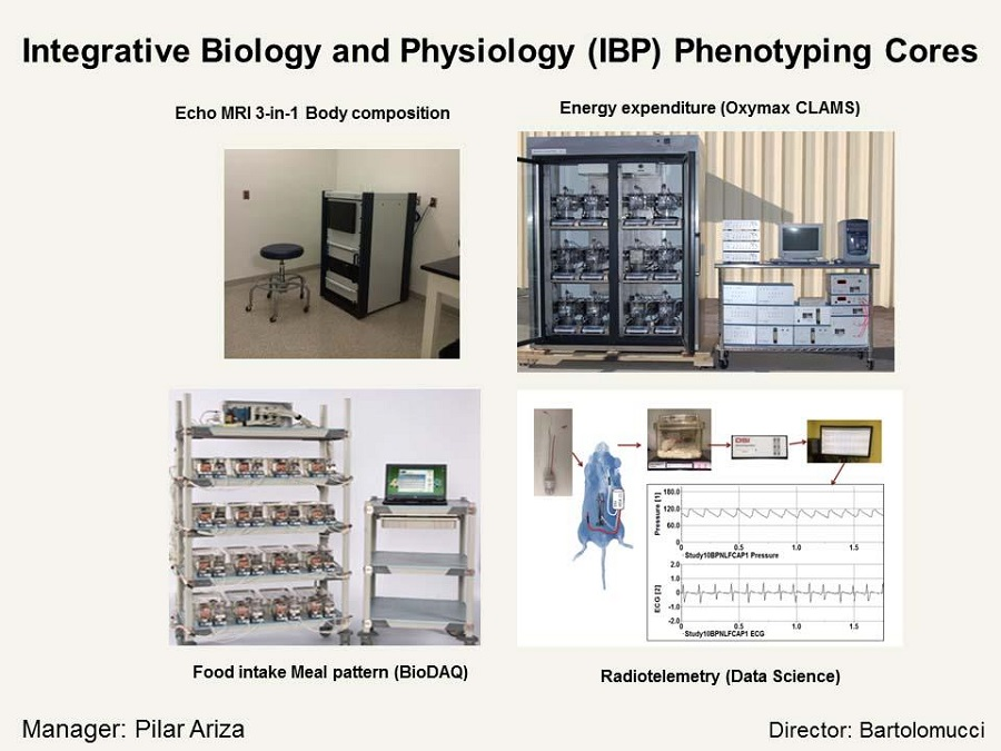 Integrative Biology and Physiology Phenotype Cores
