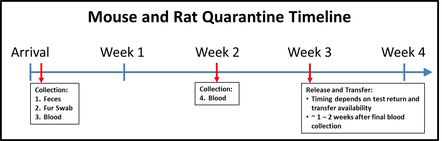 Mouse and rat quarantine timeline. Arrival: Collection (feces, fur swab, blood); Week 2: Collection (Blood); Week 3: Release and transfer (Timing depends on test return and transfer availability, ~1-2 weeks after final blood collection)